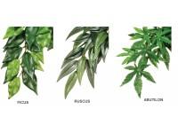 Jungle Plants
