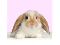 Rabbit & Sm Animal Products